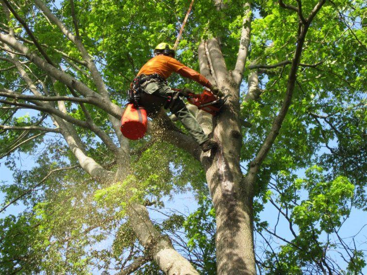 G&V Tree Service - Springfield, VA